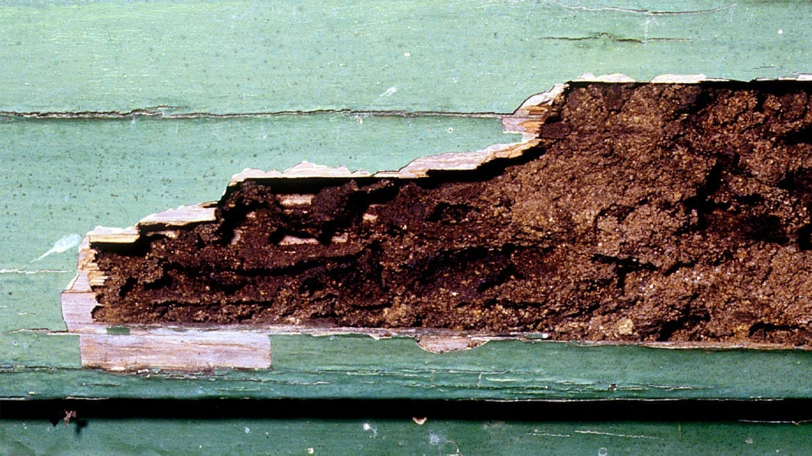 Signs of Termite Activity or Damage